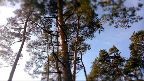 Opportunistenbäume, blöde. Gedeihen offenbar auch überall.