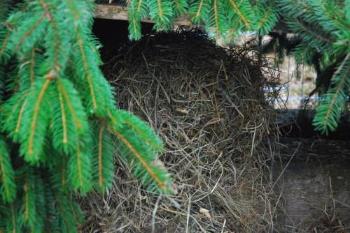 Herrn Hase eine Höhle gebaut.