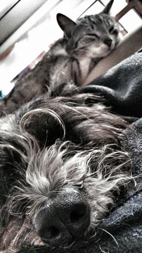Haustiere gehören nicht aufs Sofa.