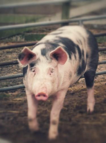 Siet nur aus wie im Gatter. Ist aber am Eingang zur Riesenschweineweide.