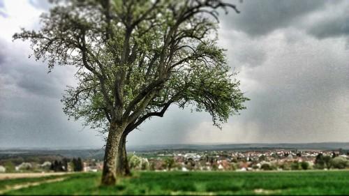 Auch der Odenwald:  Unter die Lupe genommen.