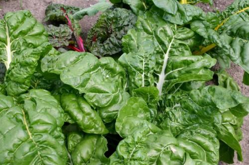 Abendessen wächst im Garten, nicht im Supermarkt.