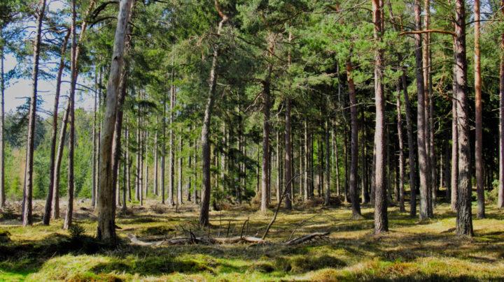 Mein Haus, mein Auto, mein Wald.