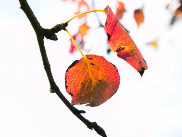 Herbstlich unterwegs.